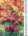 花朵 花 花卉 36548038