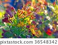 花朵 花 花卉 36548342