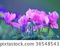 花朵 花 花卉 36548543
