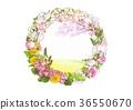 민들레, 봄, 벚꽃 36550670