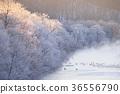 覆有霜的树 冰霜覆盖的树木 鹤 36556790
