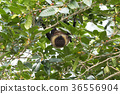 animal animals bat 36556904