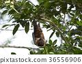 animal animals bat 36556906