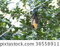 야에 야마 박쥐 36556911