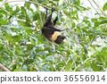 animal animals bat 36556914