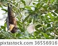 animal animals bat 36556916