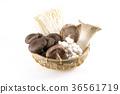 버섯 모듬 36561719