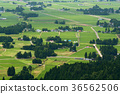 田園 田園風景 水稻 36562506