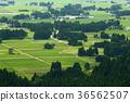 田園 田園風景 稻田 36562507