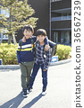 elementary, student, primary 36567239