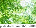 พืชสีเขียว,ใบไม้,ผักใบ 36569009