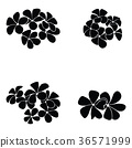 frangipani silhouette 36571999