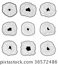 Collection of tree rings. 36572486