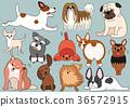 vector, vectors, illustration 36572915
