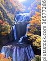 袋田の滝 단풍 03 36577286