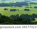田園 田園風景 稻田 36577423