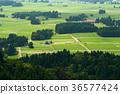 稻田 风景 水稻 36577424