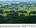 田園 田園風景 稻田 36577425