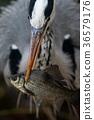 นก,โอซาก้า,สวน 36579176