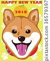 草丛 柴犬 丛林犬 36579397