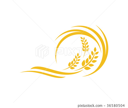 Agriculture wheat Logo Template vector icon design 36580504