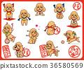toy, poodle, dog 36580569