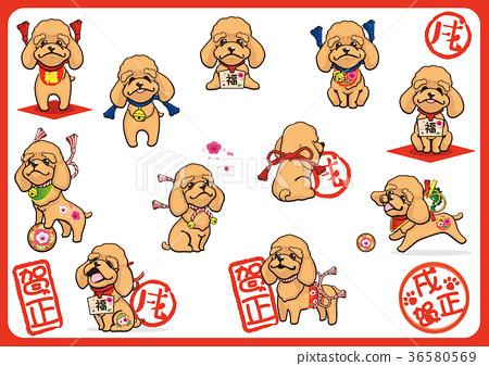 玩具狗 貴賓狗 玩具貴賓 36580569