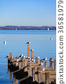 Seagulls on Ammersee 36581979