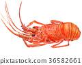 水彩 水彩画 大螯虾 36582661