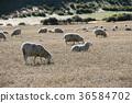 동물, 농장, 목장 36584702