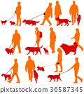 dog man walk 36587345