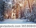 Tree in winter landscape 36590849