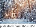 Tree in winter landscape 36590851