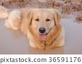 animal, dirt, dog 36591176