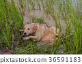animal, dirt, dog 36591183