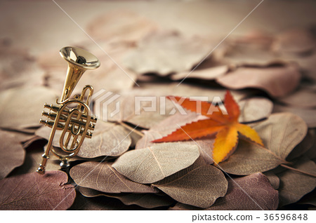 Autumn Objects - maple leafs, coffee, dry flowers, sweet persimmon etc. 103 36596848