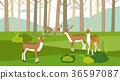 Peaceful wild animals, RF illustration 003 36597087
