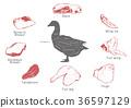 information of meat parts, RF illustration 009 36597129