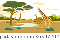 Peaceful wild animals, RF illustration 001 36597202