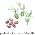 種子 植物 植物學 36597684