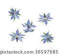 紫草科 花朵 花 36597685