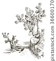 Prickly Pear Cactus. plants engraved hand drawn in 36600170