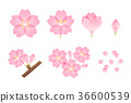 cherry blossom, cherry tree, sakura 36600539