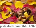 가을, 단풍, 도토리 36601207