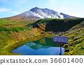 홋카이도 아사히 다케 단풍 36601400