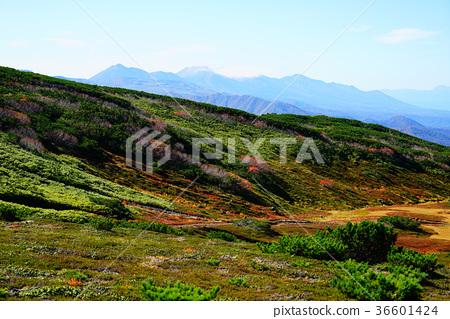 홋카이도 아사히 다케 단풍 36601424