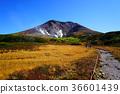 홋카이도 아사히 다케 단풍 36601439