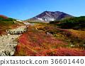 홋카이도 아사히 다케 단풍 36601440