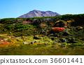 홋카이도 아사히 다케 단풍 36601441