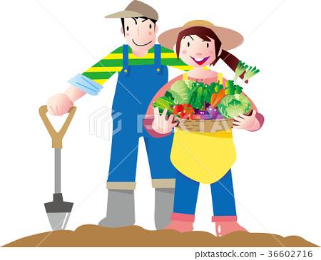 矢量 菜園 收穫 36602716